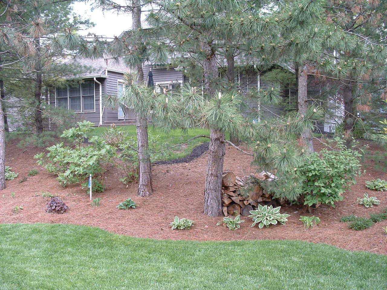 Before-Knauer Trees